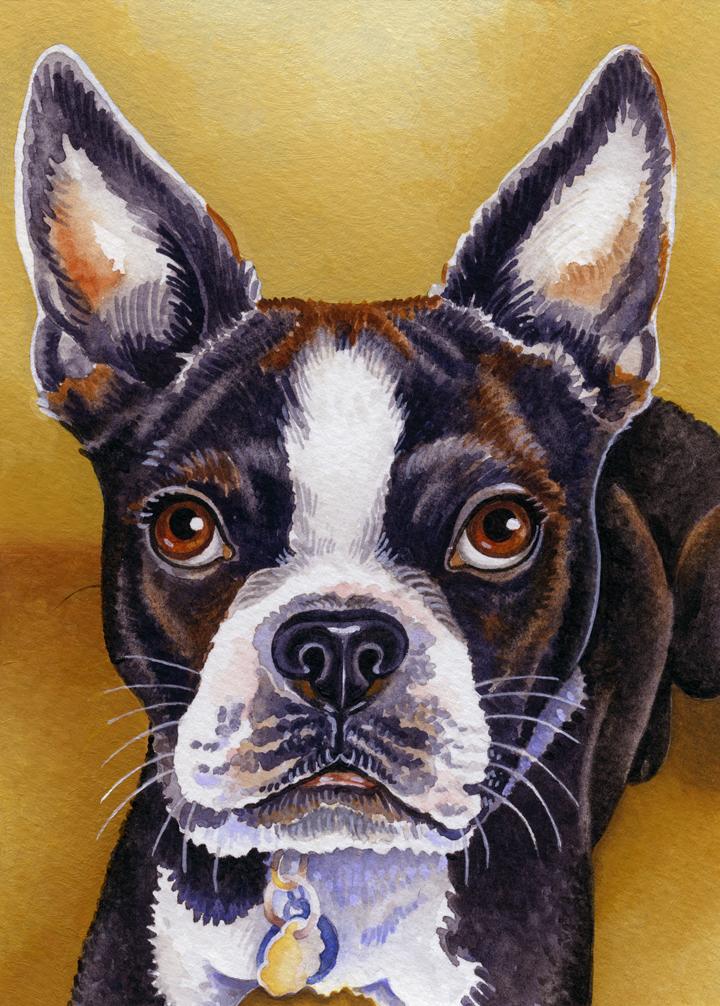 Watercolour portrait of a French Bulldog.