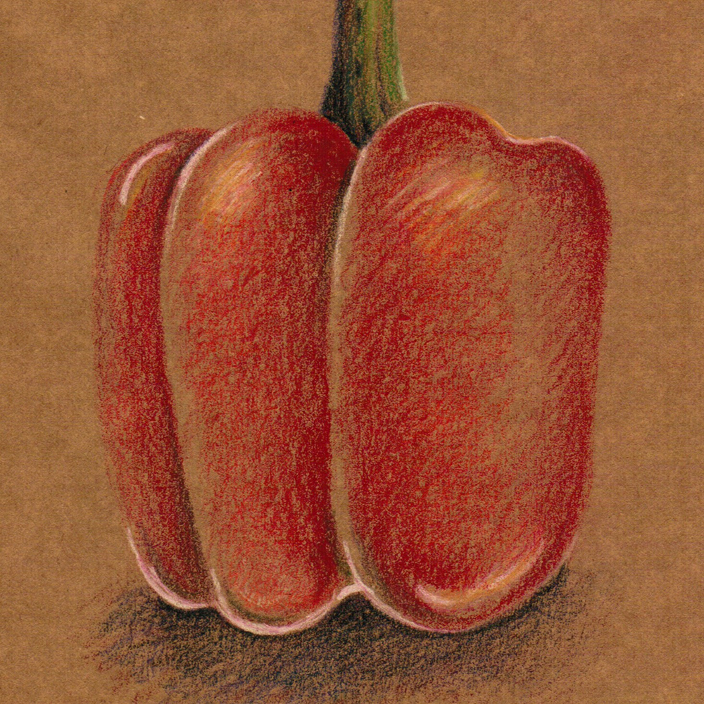 Drawing of a red pepper done in coloured pencil on kraft paper