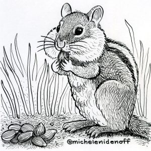 Line drawing of a chipmunk by Michele Nidenoff